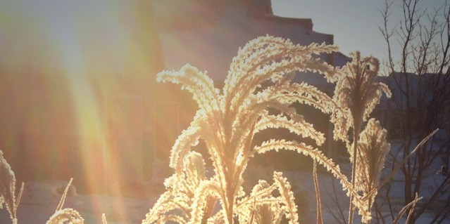 cropped-image2.jpg