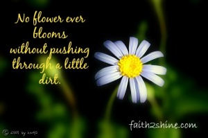 No flower ever blooms