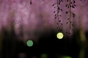 Evening breeze by chikache