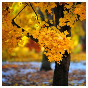 Autumn by Edgar Barany